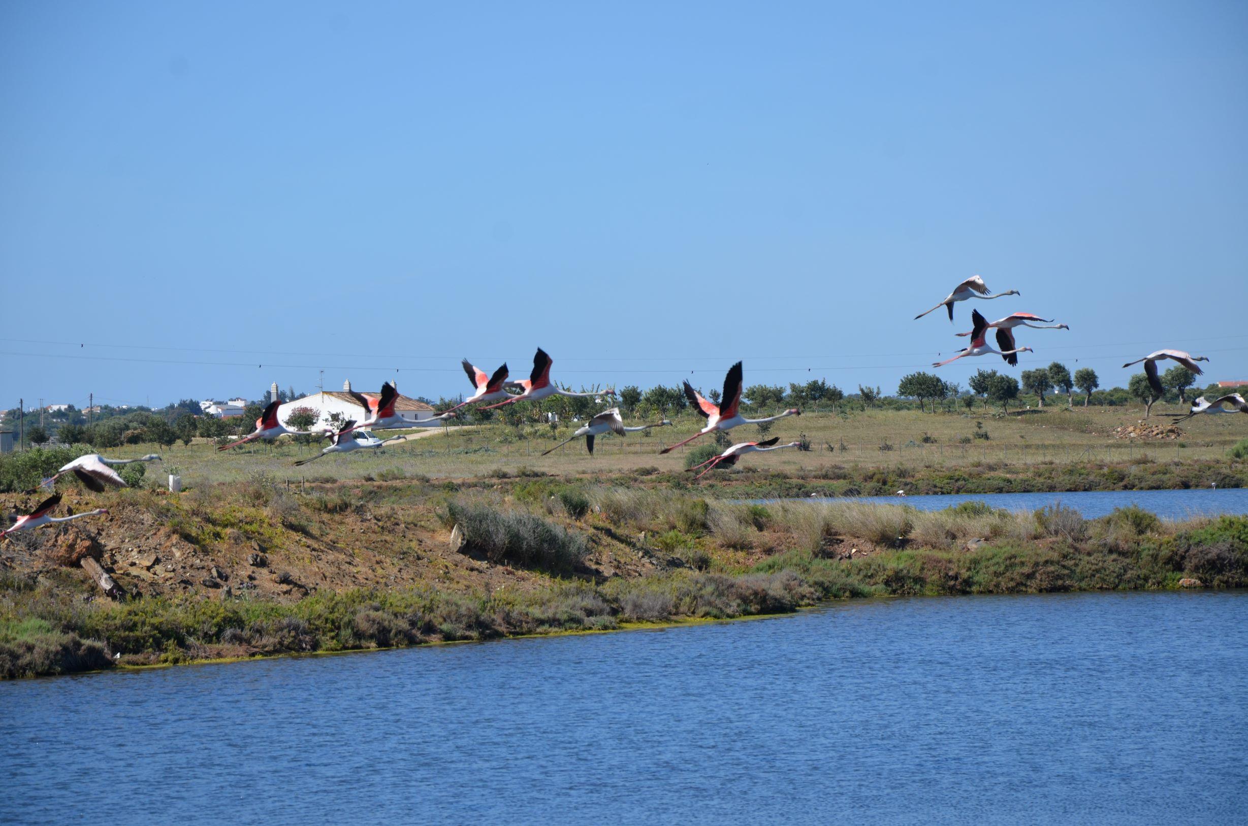 passeios de barco no Algarve